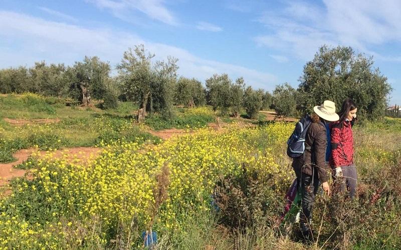 Vida en el olivar